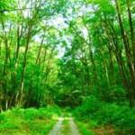 樹木の香りが心身をリラックスさせる森林浴